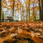 秋のキャンプについて